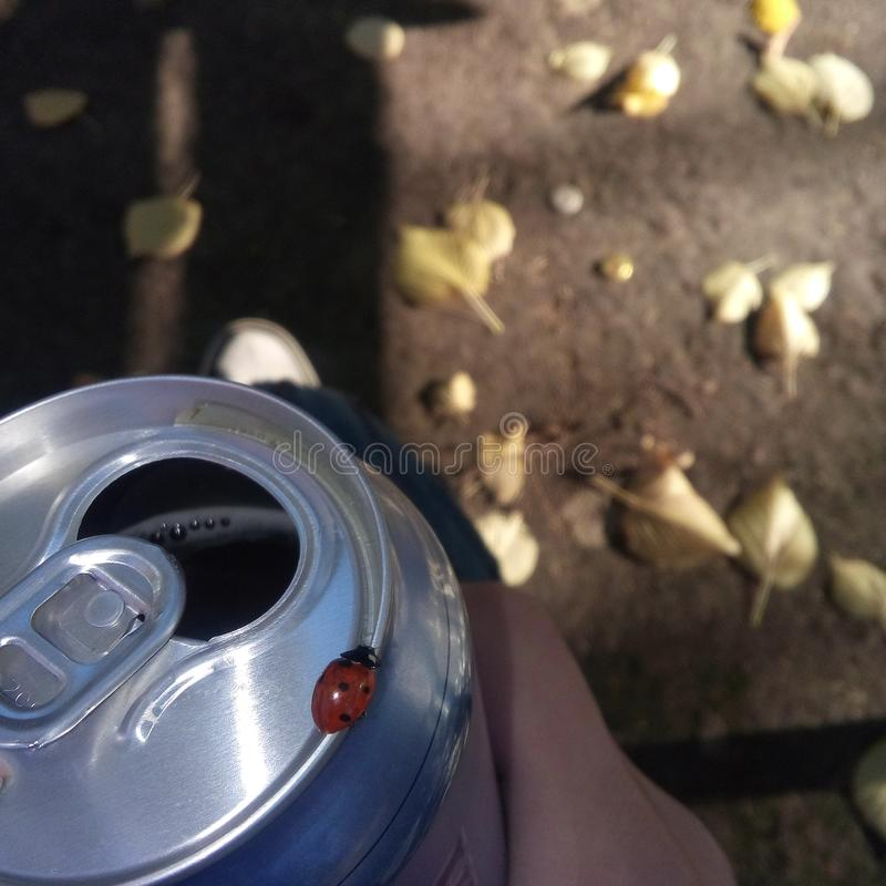 Bière et sauvage images libres de droits