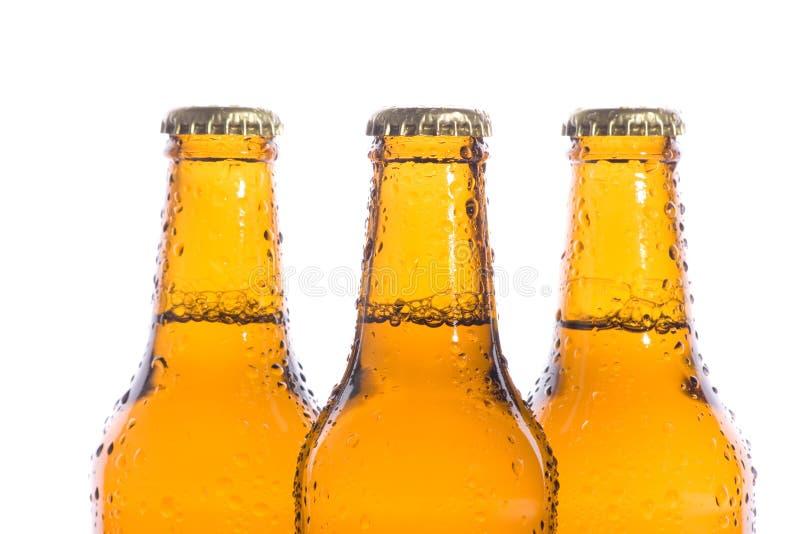 Bières d'isolement fraîches photo libre de droits