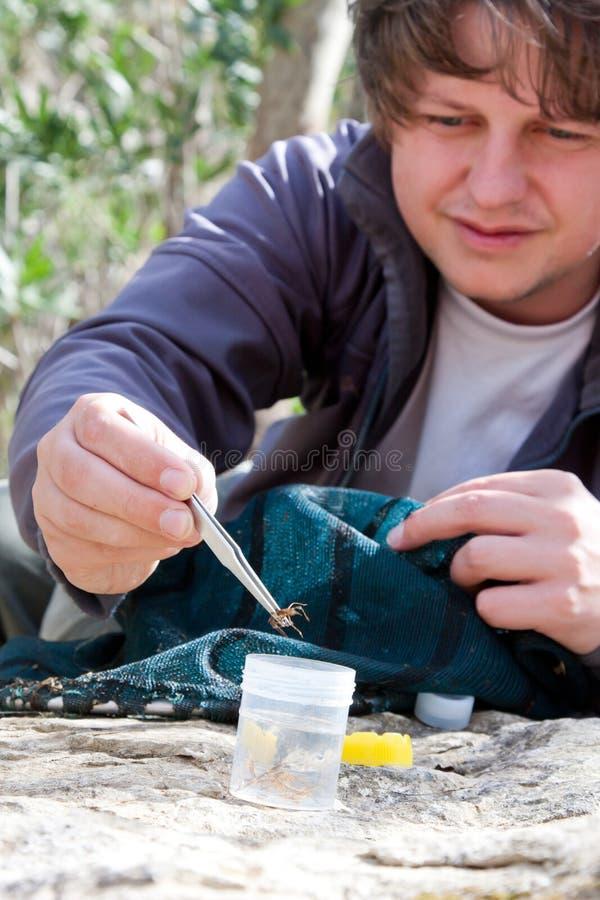 Biólogo que coleta larvas imagem de stock