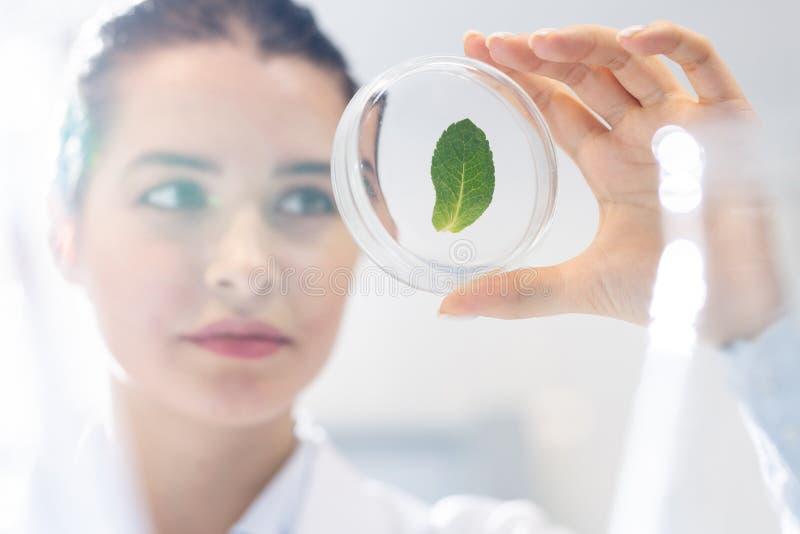 Biólogo que estudia la estructura de la hoja de la planta fotos de archivo