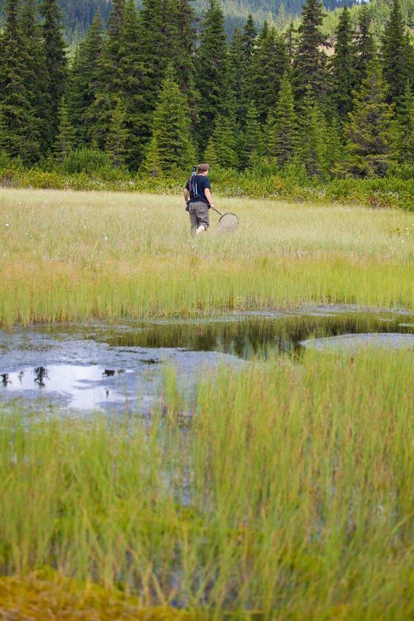Biólogo que explora um pântano fotografia de stock royalty free