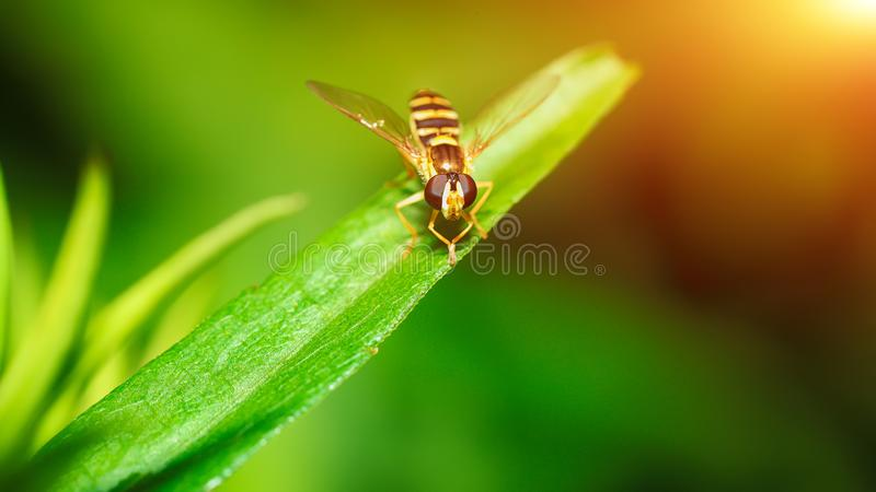 Bi i natur Makro royaltyfri fotografi