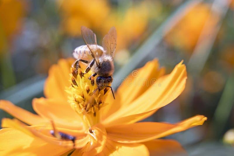 Bi och flower5 fotografering för bildbyråer