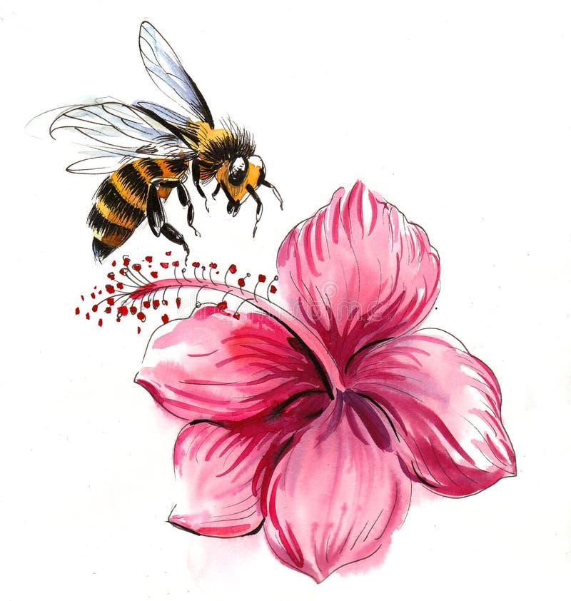 Bi och hibiskus royaltyfri illustrationer