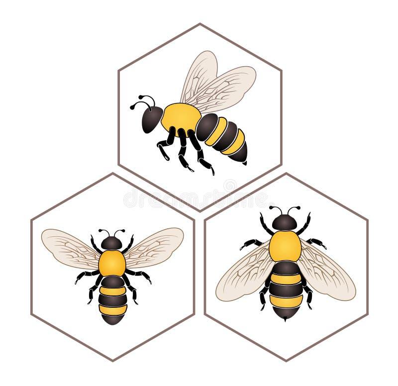 Bi på honungcellen royaltyfri illustrationer
