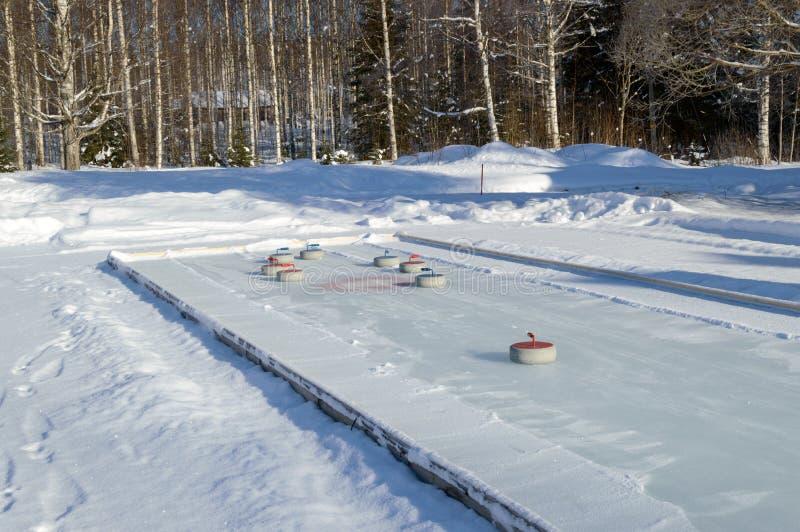 Bi på nemorosaCurling fält för vit windfloweranemon i Finland vinterskog royaltyfria foton