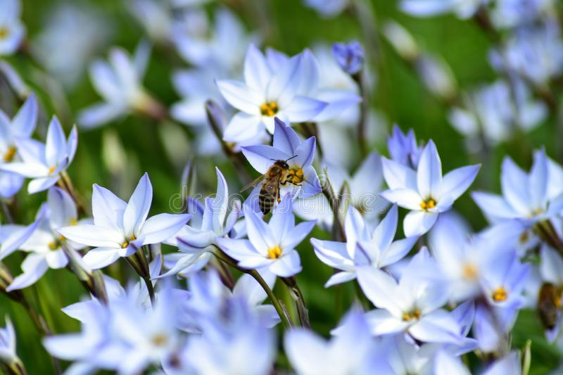 Bi p? en blomma royaltyfri fotografi