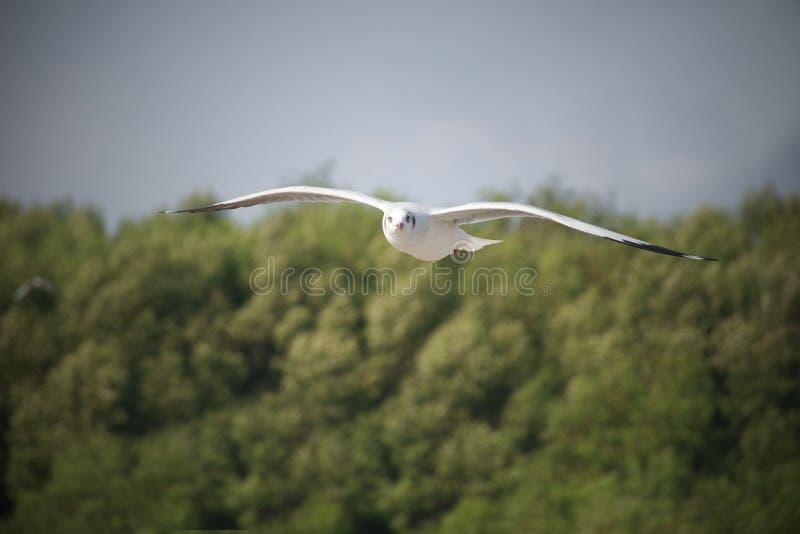 Białego seagull latająca depresja fotografia stock