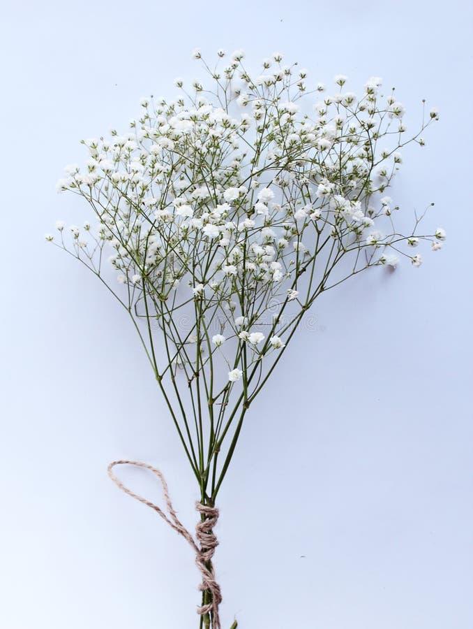 Biały bukiet kwitnie rocznik wiosny tło fotografia stock