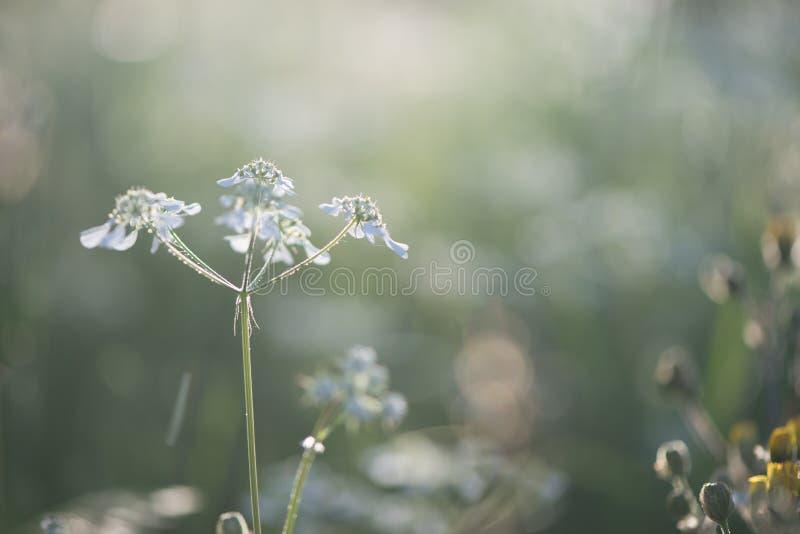 Biały kwiat na ładnym zielonym bokeh i naturalnym krajobrazie w zmierzchu zaświeca fotografia stock