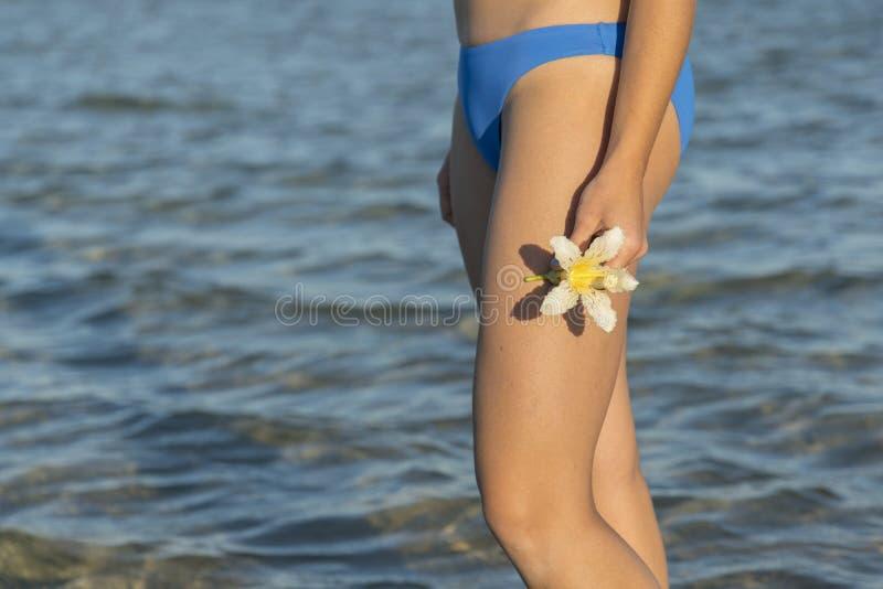 Białych kwiatów frangipani w kobiet rękach przeciw morza niebieskiemu niebu i plaży kwiat plumeria beach tropikalny Morze zdjęcia royalty free