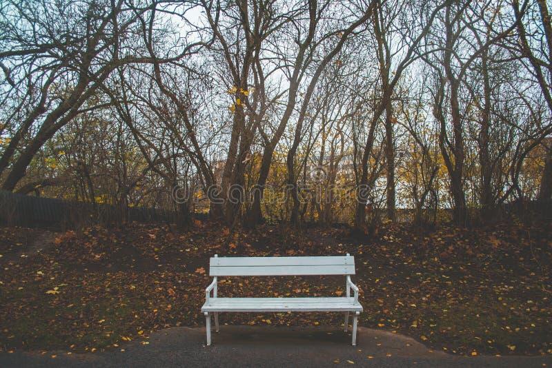 Biała ławka w parku podczas markotnej jesieni obraz royalty free