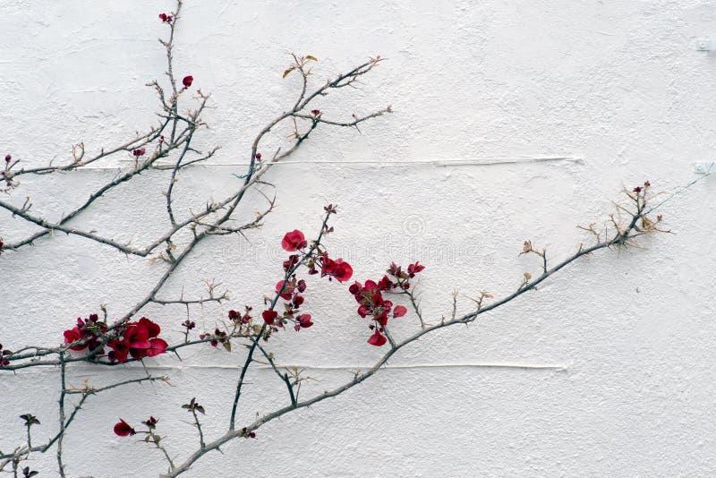 biała ściana obrazy stock
