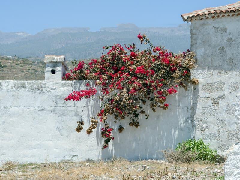 Biała ściana zakrywa z zmrokiem - czerwony bougainvillea obraz royalty free