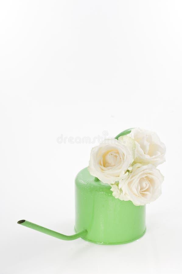 Biała świeża wiązka wzrastał kwiaty w polewaczce fotografia royalty free