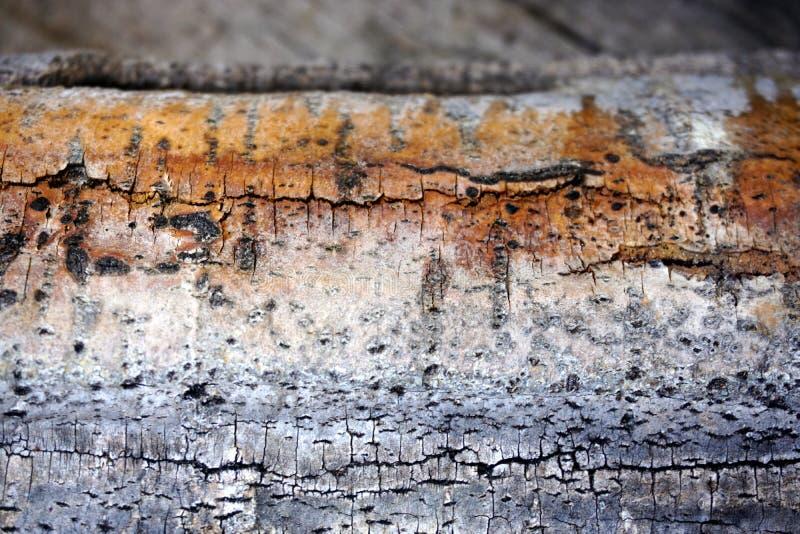 Biała brzoza - prostacka barkentyna i bagażnik brzoza jako ciekawa tekstura zdjęcia royalty free