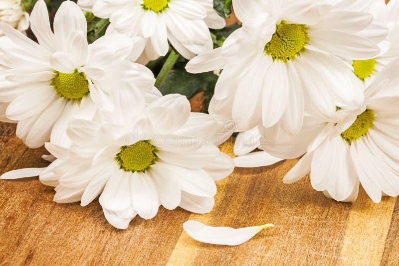 Biali chryzantema kwiaty zdjęcia royalty free