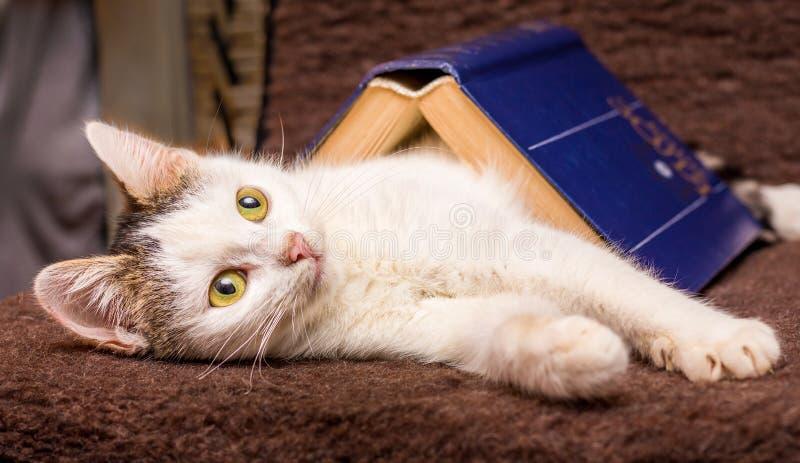 Biała figlarka jest pod książką z błękitną pokrywą Kot blisko book_ obraz stock