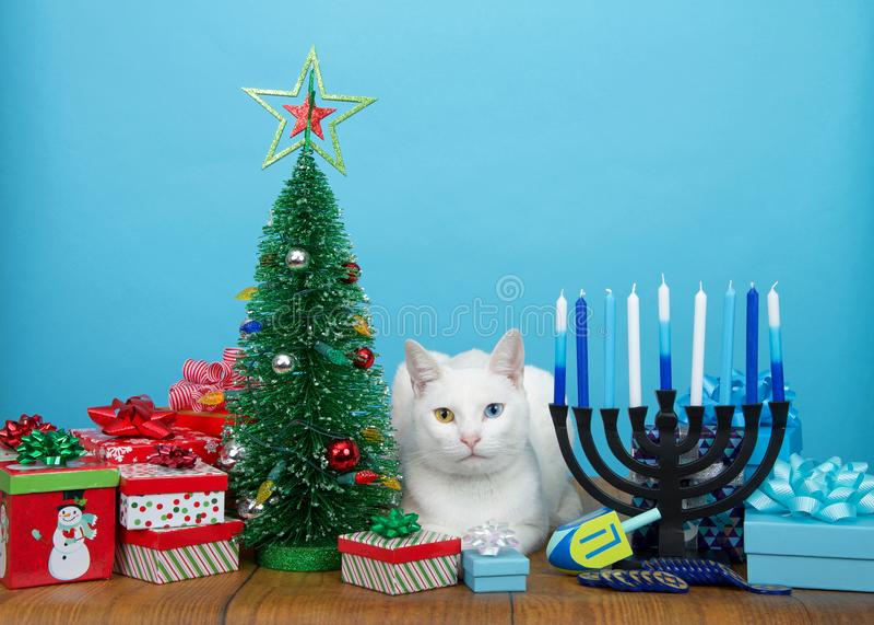 Biała figlarka kłaść między bożych narodzeń i Hanukkah dekoracjami zdjęcie royalty free