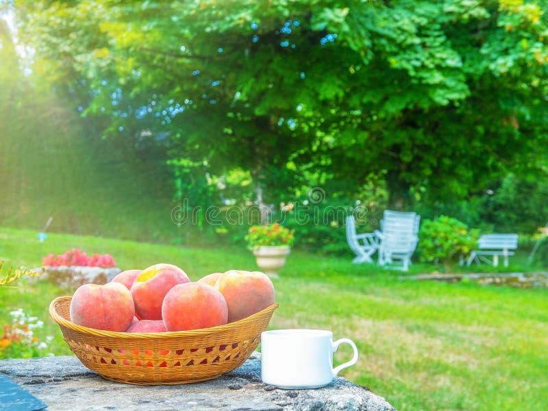 Biała filiżanka cofee przed ogrodowym lato rankiem zdjęcie stock