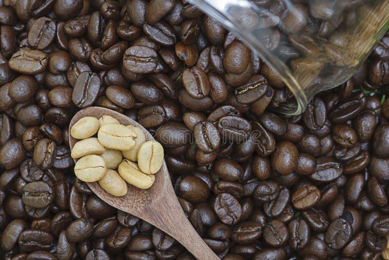 Biała kawowa fasola w łyżce obraz stock