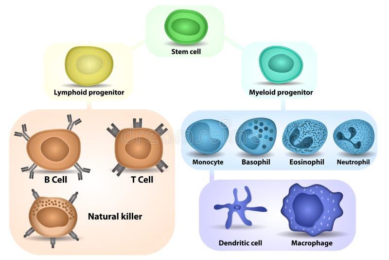 Biała komórki krwi formacja ilustracji