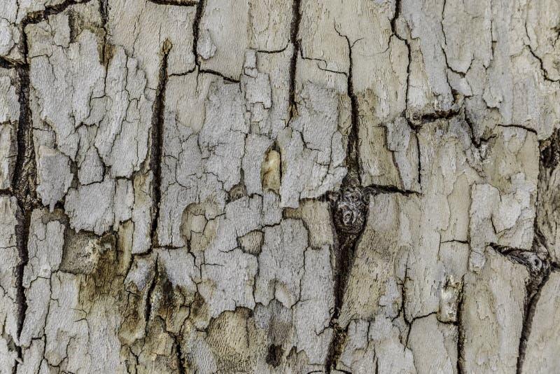 Biała krakingowa drzewna barkentyna zdjęcia stock