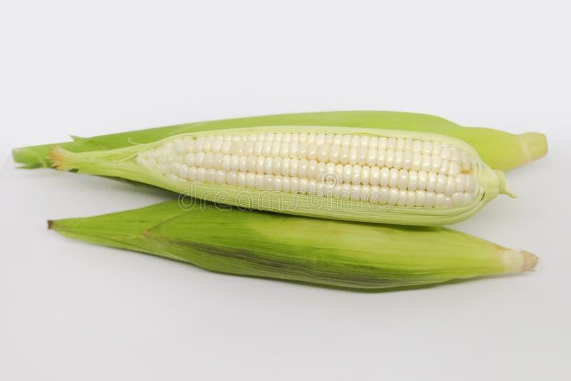 Biała kukurydzy kukurudza fotografia royalty free