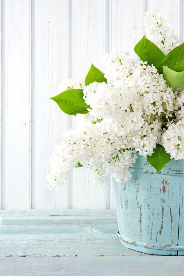 Biała lila wiosna kwitnie w błękitnej wazie obraz stock