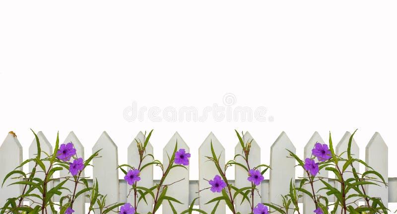 Biała palika ogrodzenia granica z purpurową kwiat granicą odizolowywającą na bielu z przestrzenią dla kopii above - tafluje horiz fotografia stock