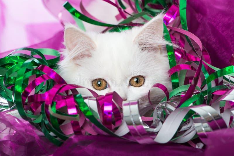 Biała perska figlarka z kolorowymi streamers zdjęcie royalty free