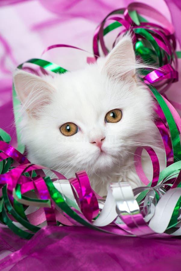 Biała perska figlarka z kolorowymi streamers obraz royalty free