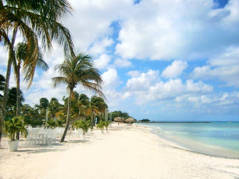 Biała piaskowata plaża z drzewkami palmowymi fotografia stock