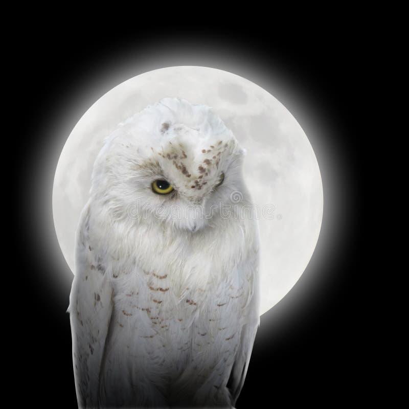 Biała Sowa W Nocy Z Księżyc Obrazy Royalty Free