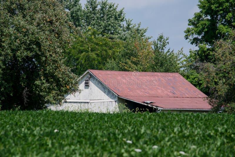 Biała stajnia na gospodarstwie rolnym zdjęcia stock