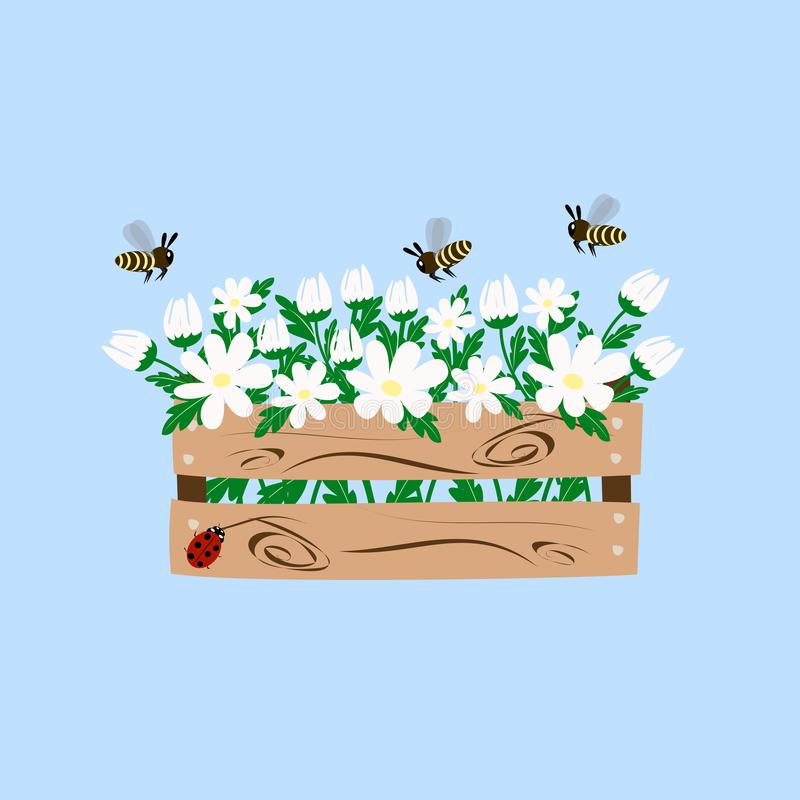 Biała stokrotka w pudełku royalty ilustracja