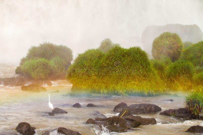 Biała tęcza Iguazu i fotografia royalty free
