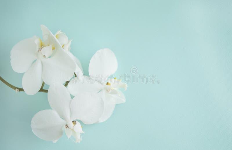 Białe delikatne orchidee na turkusie wybijają monety tło obraz stock
