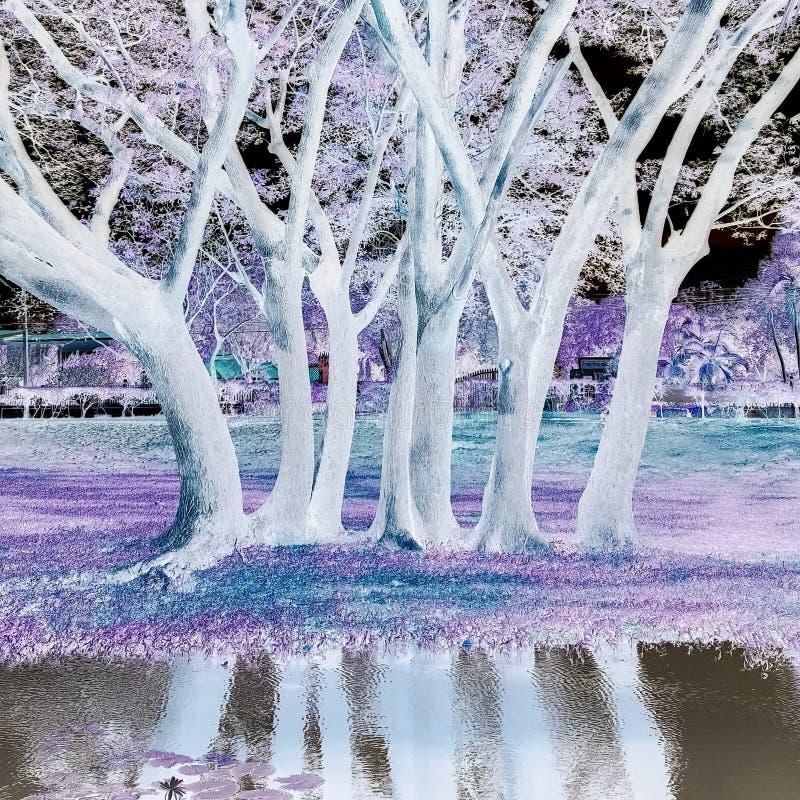 białe drzewo zdjęcia royalty free