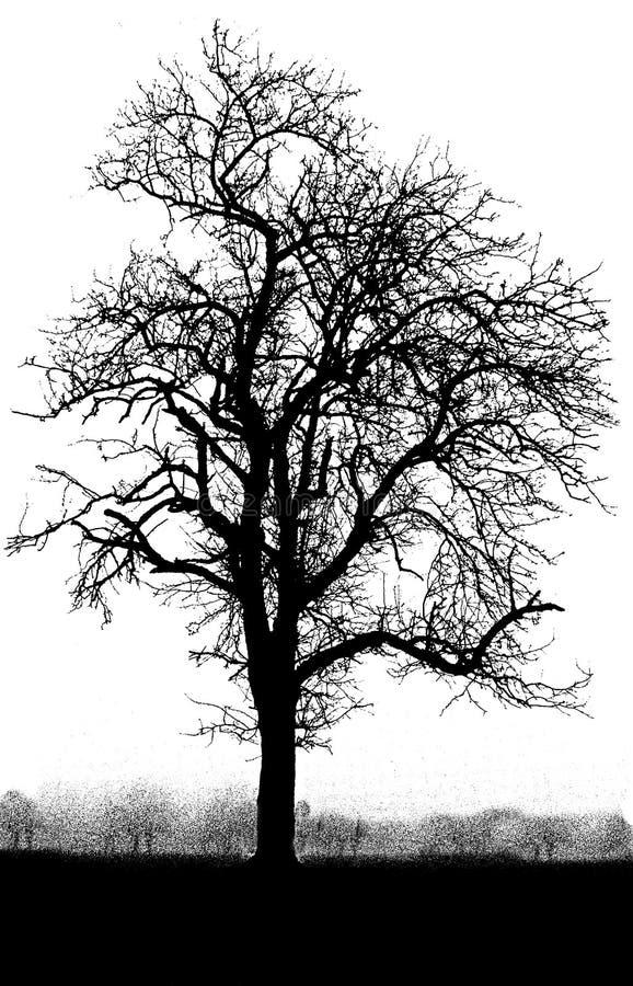 białe drzewo, czarny zdjęcia stock