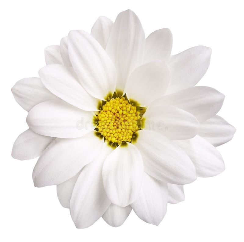 białe kwiaty fotografia stock