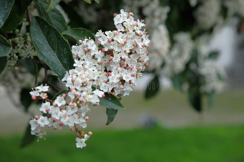 Białe kwiaty na drzewie jesienią obraz royalty free
