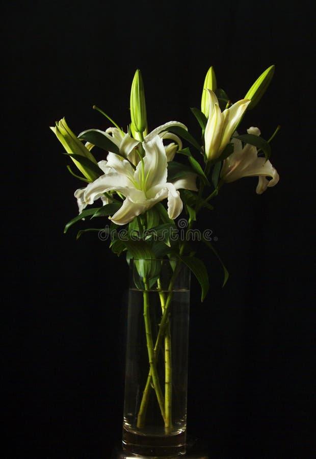 białe lilie obraz stock