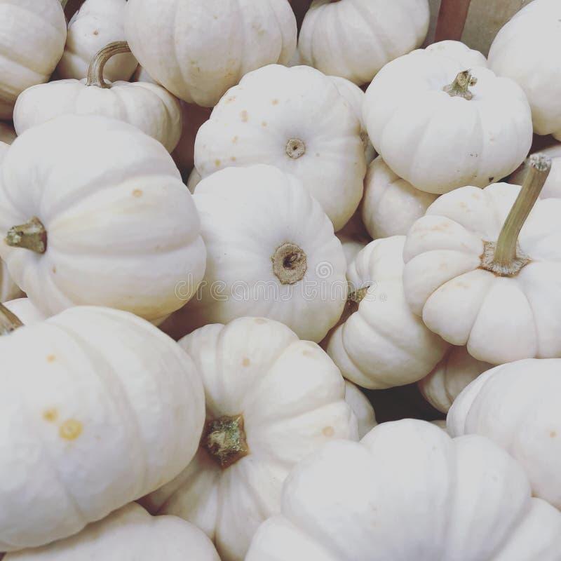 Białe mine banie wypiętrzają dziękczynienia tła tradycyjną dekorację i jedzenie zdjęcia stock