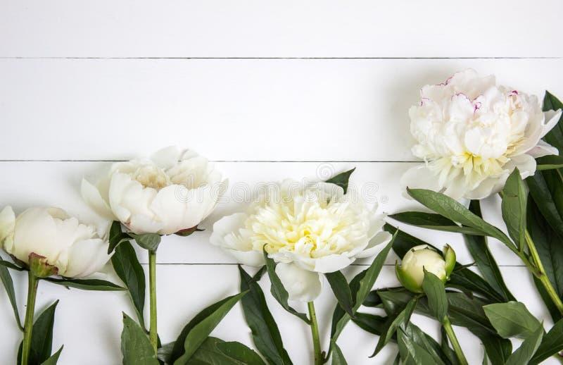 Białe peonie kwitną na białym nieociosanym drewnianym tle z pustą przestrzenią dla teksta Mockup, odgórny widok zdjęcia stock