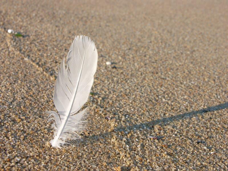 białe piórko piasku. obrazy stock