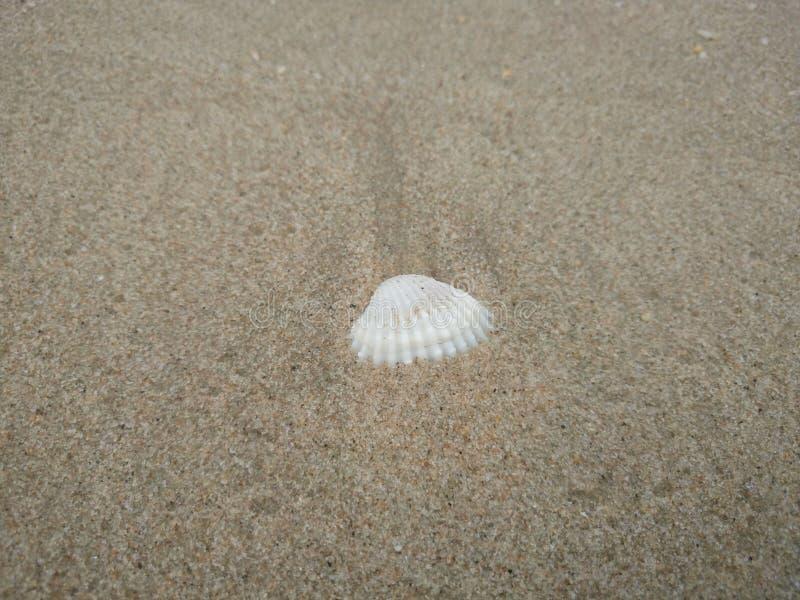 Białe skorupy są na plaży zdjęcie stock