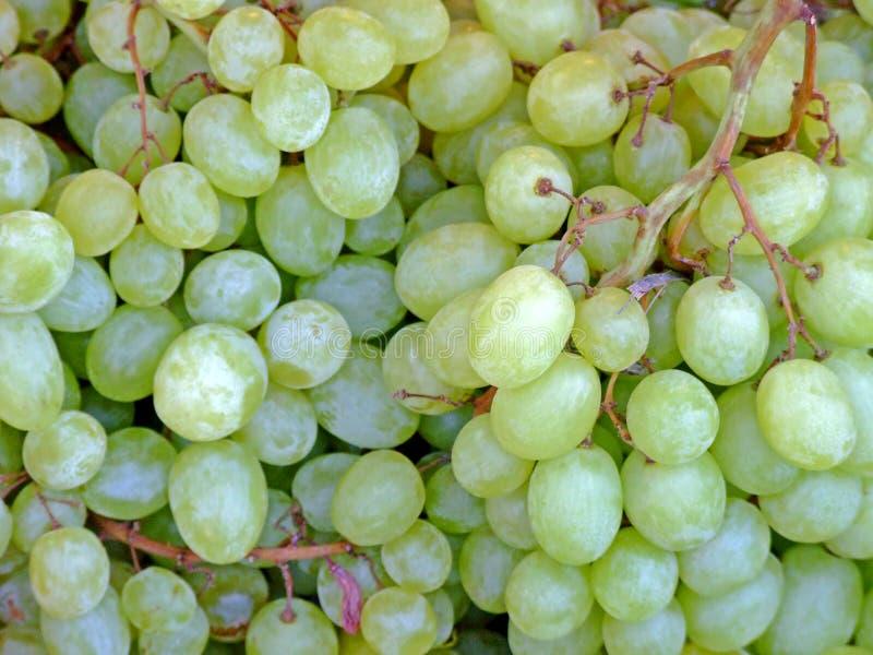 białe z winogron zdjęcia stock