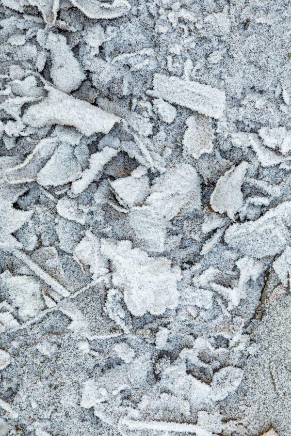 Białe zamrożone liście zimą na ziemi obrazy royalty free