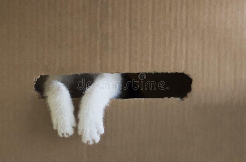 Białego kota łapy są zerkaniem z dziury w kartonie kosmos kopii fotografia royalty free